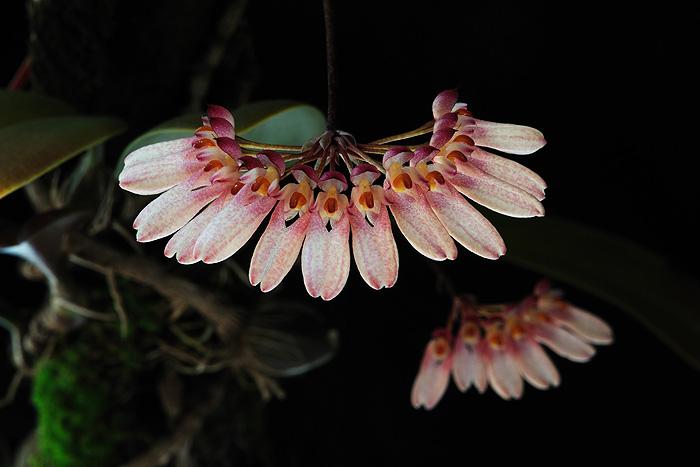 Ιάματα - Necklace of Beauty