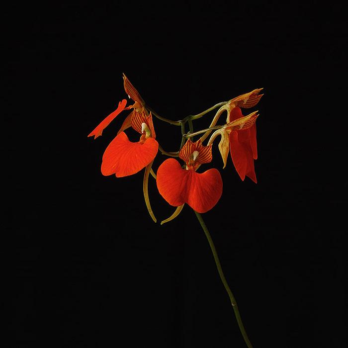 Ιάματα - Serene Overview (Devata)